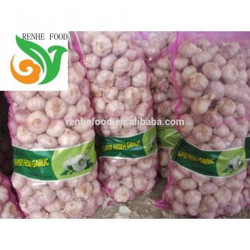 Jinxiang Normal White Garlic