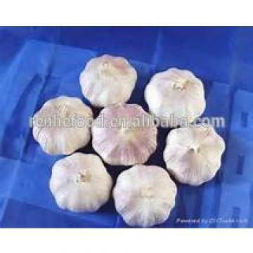 2017 Crop New Fresh Garlic
