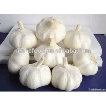 Supply Jinxiang Garlic from Renhe Food