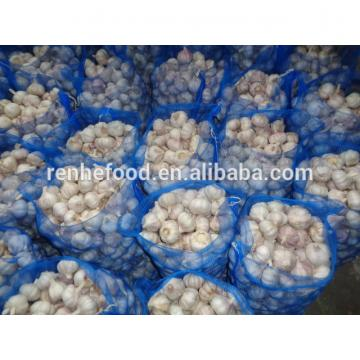 reliable garlic supplier / fresh chinese garlic