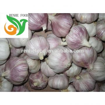 Garlic Export To The World Market