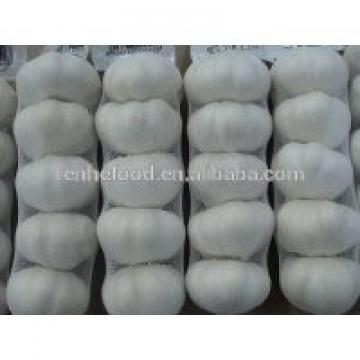 China Pollution Free White Garlic Hot Selling
