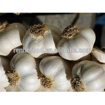Good quality food garlic on sale