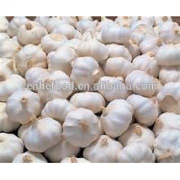 Sell Vegetable white Garlic for Dubai