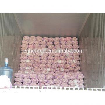 Fresh White Garlic with Carton Packing