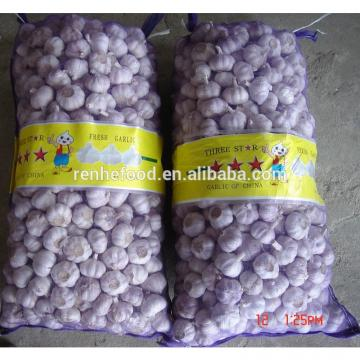 China garlic price/Natual Jinxiang garlic/ Garlic exporters