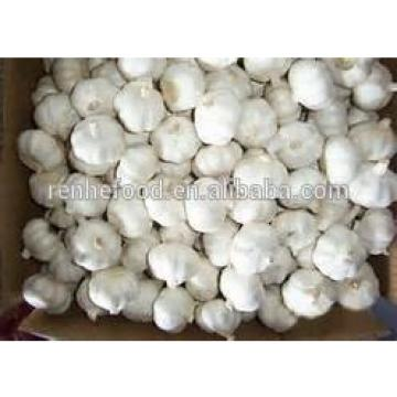 Best Price and Quality 2017 Crop Chinese White Garlic
