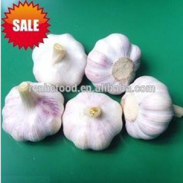 Super fresh pure white garlic from Renhe Food