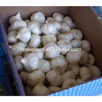 New Arrival with high quality White garlic for sale
