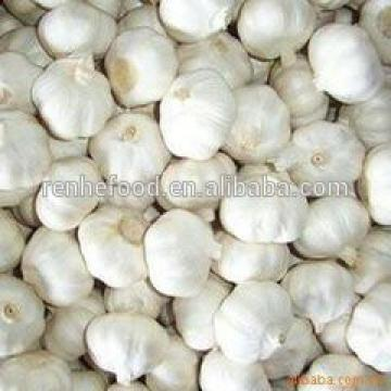 China Factory Exporter 2017 New Crop Normal White Garlic