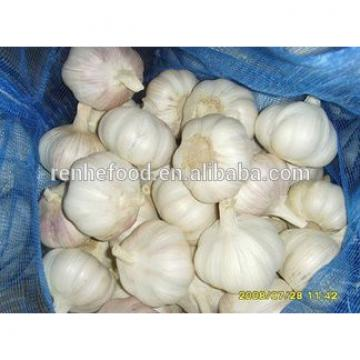 Organic New Crop Bulk Fresh Garlic