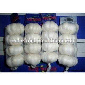 Brand new fresh normal white and pure white garlic