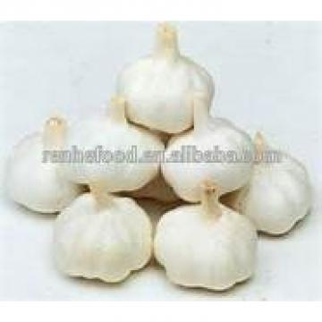 Sell High-quality Fresh Natural pure white garlic