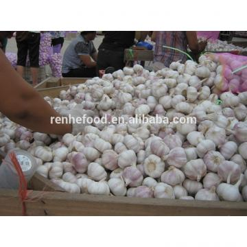 Chinese fresh garlic natural garlic 4.5cm-6.5cm