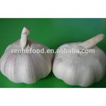 Fresh Organic White Garlic Price