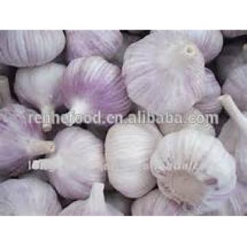 2017 New Crop Fresh White Garlic with Carton Packing