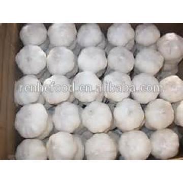 New crop high quality fresh garlic directly supply