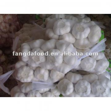 6.5 cm pure white garlic