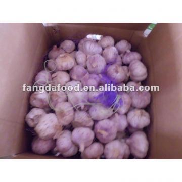 best pure white garlic from China