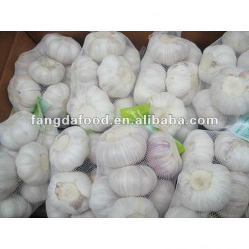 Super garlic size 6.0cm 1kg/bag crop