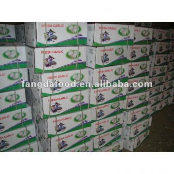 Hot sell Chinese Garlic