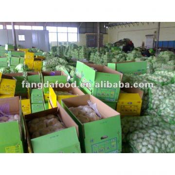 Fresh Natural Garlic in Carton Package, New Crop