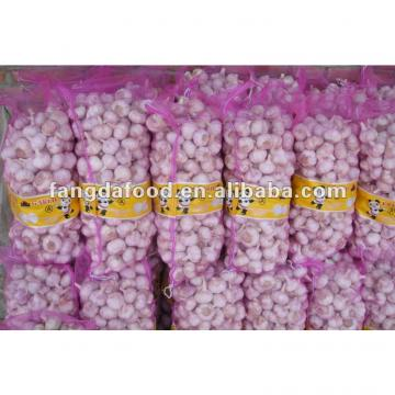 crop Chinese pure white garlic packed in carton