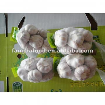 big size chinese garlic on promotion