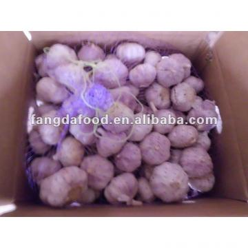 Hot sell Chinese red Garlic