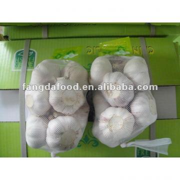 garlic crops