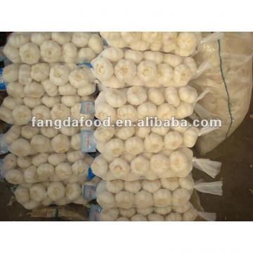 chinese snow white garlic
