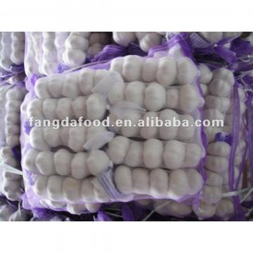 china fresh white garlic
