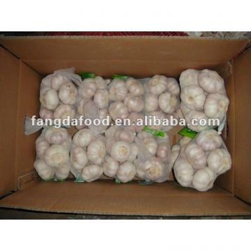 Chinese fresh normal white garlic in
