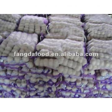 fresh garlic from china jinxiang