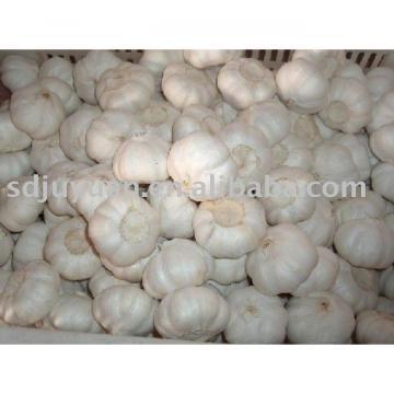New Crop Fresh Pure White Garlic