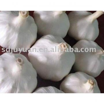 New Crop Fresh Pure White Garlics