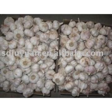 New Fresh Normal White Garlic