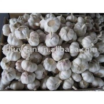 New Crop Fresh Normal White Garlic