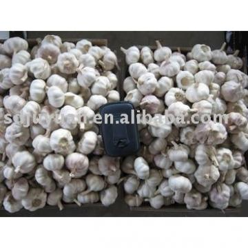 New Fresh Normal White Garlic