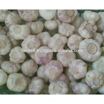 best price products china 2017 new crop pure white fresh garlic from egypt