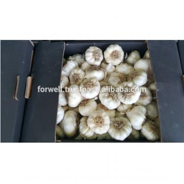 best price products new crop pure white fresh garlic