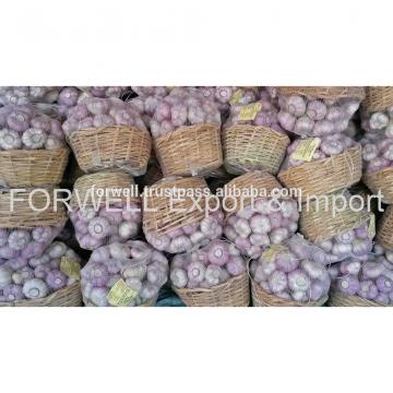garlic supplier provides best fresh garlic price