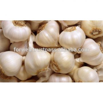 very good taste Egyptian Garlic
