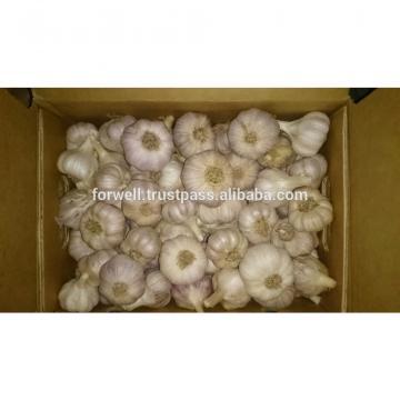 various Egyptian Garlic...DRY GARLIC...RED WHITE GARLIC