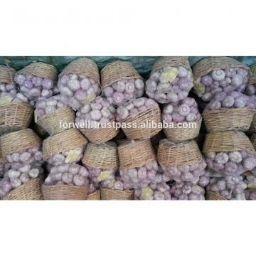 Garlic Type and Fresh Style fresh white garlic