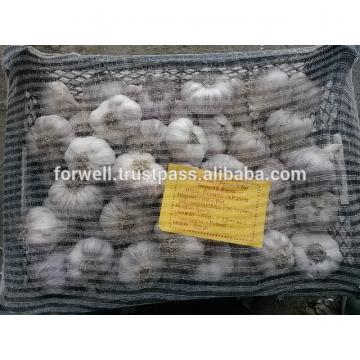 Egyptian fresh garlic (Red, White) for export