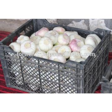 Newest crop best price high quality fresh normal white garlic fromegypt