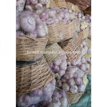 Common Cultivation Type and ISO 9001 Certification DRY & FRESH white garlic