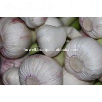 Forwell high quality Garlic New Season