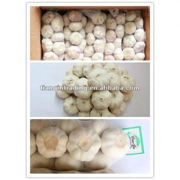 2017 China cheap fresh garlic